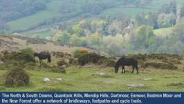 Exmoor ponies 1a with caption.jpg